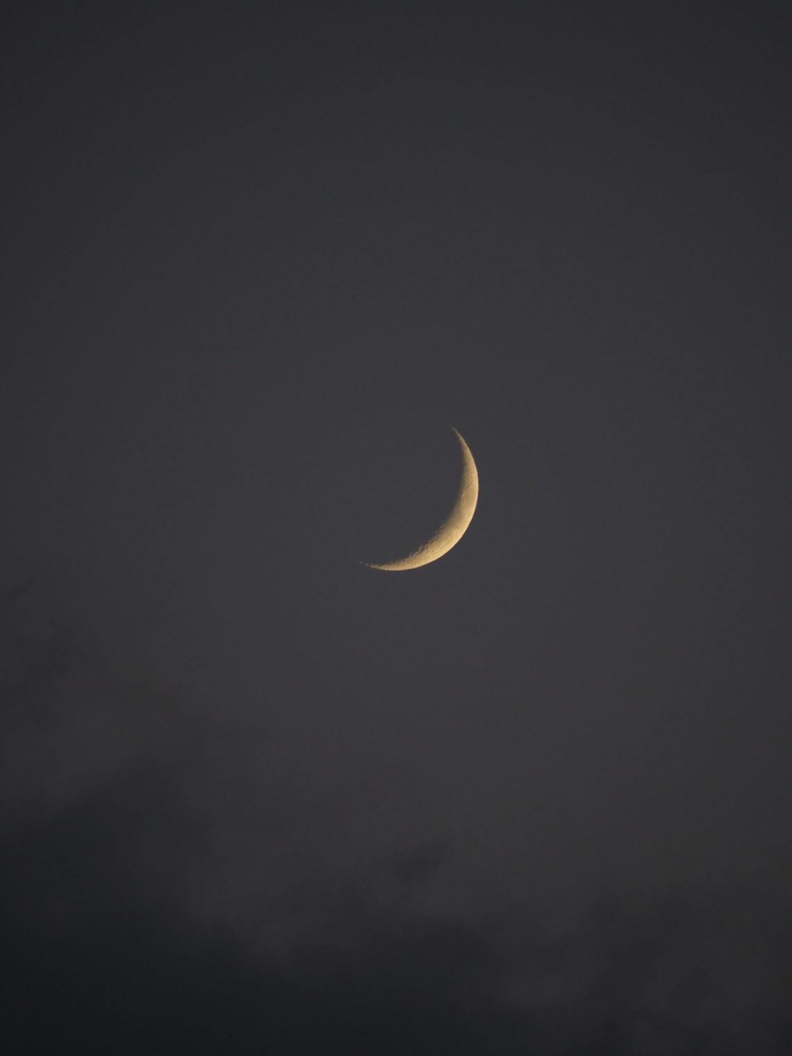 OLYMPUS DIGITAL CAMERA lune alice peralta